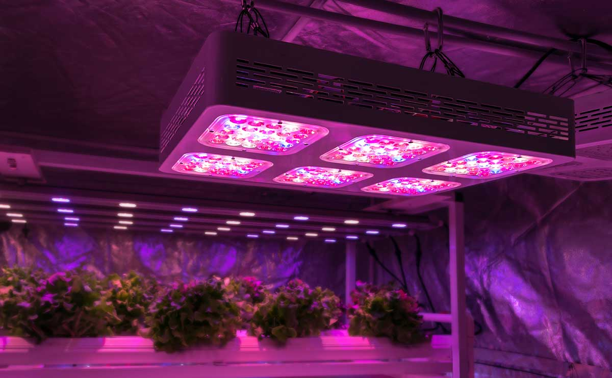 One company that CGE works with, to develop more efficient lighting technology to increase plant growth and nutritive value whilst decreasing greenhouse gas emissions.
