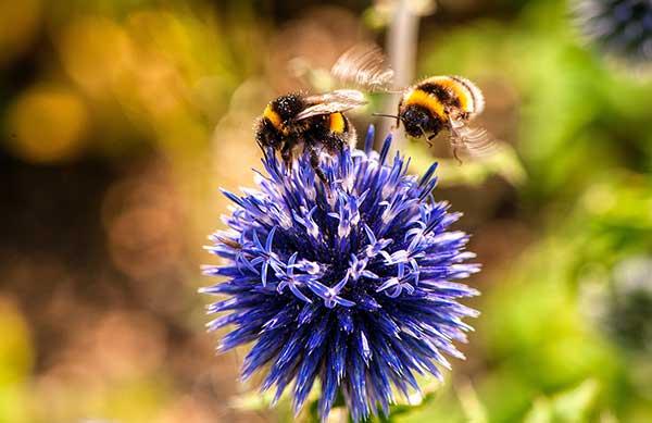 Bees flower